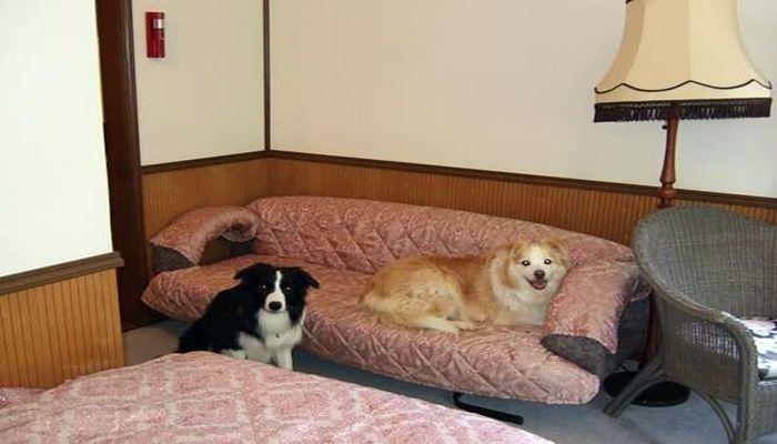 ペットと泊まれる部屋