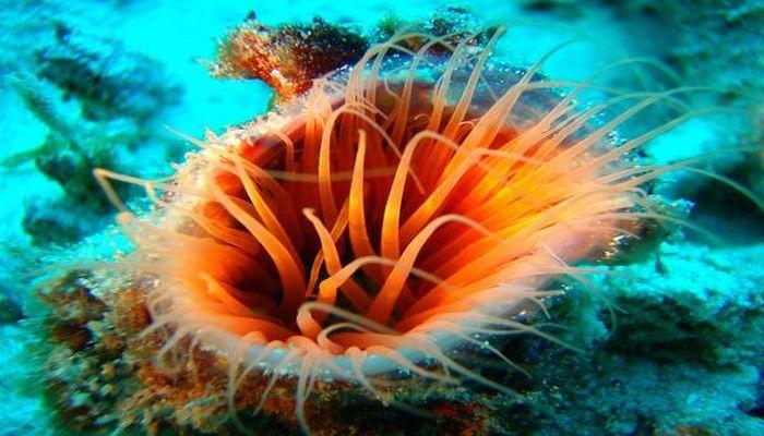 珊瑚とイソギンチャク