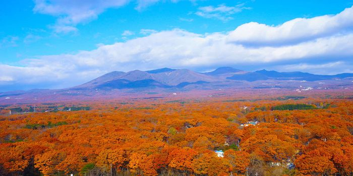 那須高原の紅葉
