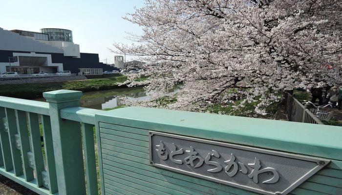 北越谷桜まつりの風景-1