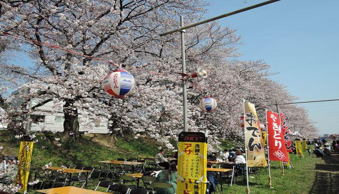北越谷桜まつりの風景-4