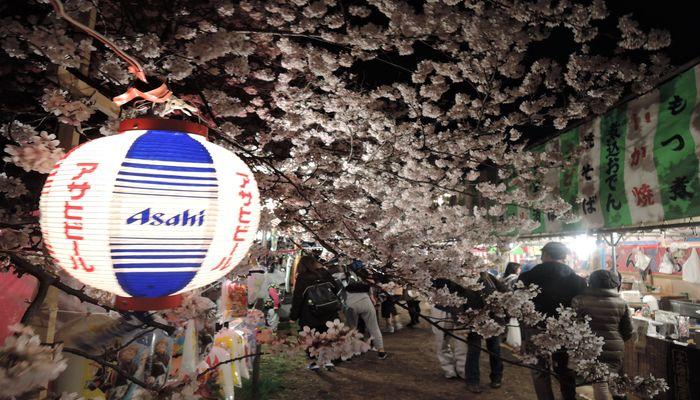 北越谷桜まつりの風景-5