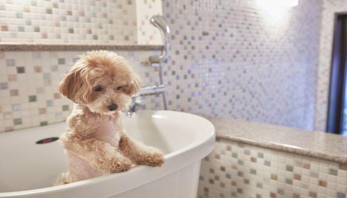 愛犬用浴室