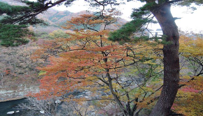 露天風呂からの紅葉風景