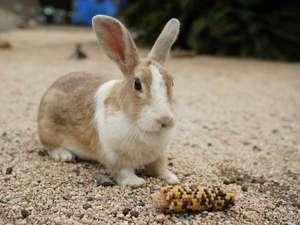 ウサギの餌