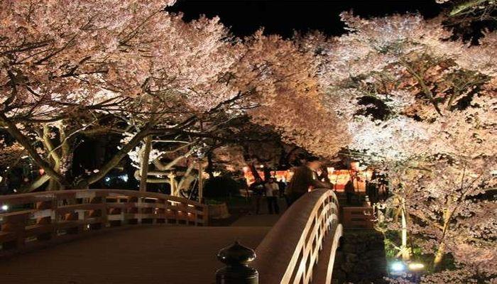 高遠城趾公園の夜桜