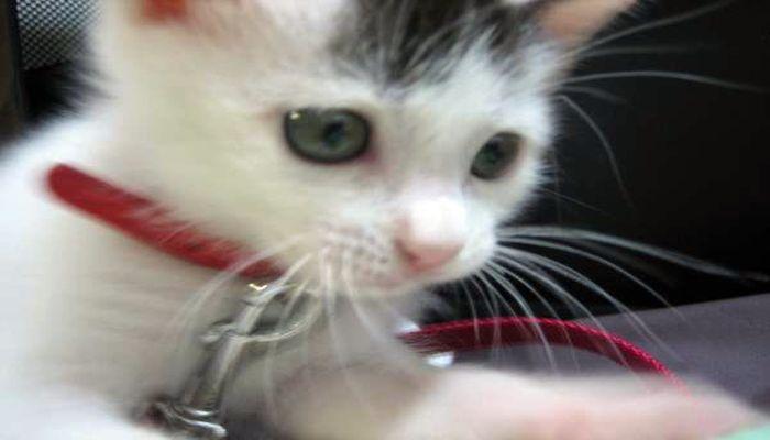 猫と泊まれる宿|玄武風柳亭