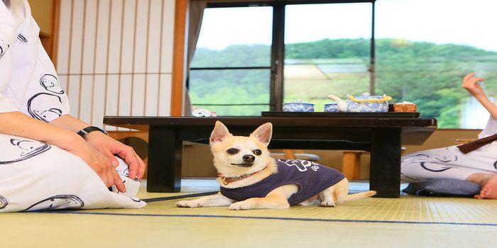 犬と泊まれる旅館