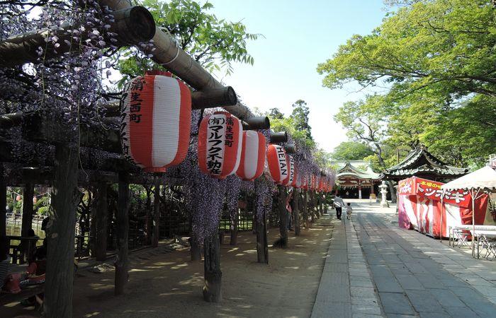 久伊豆神社の藤棚)