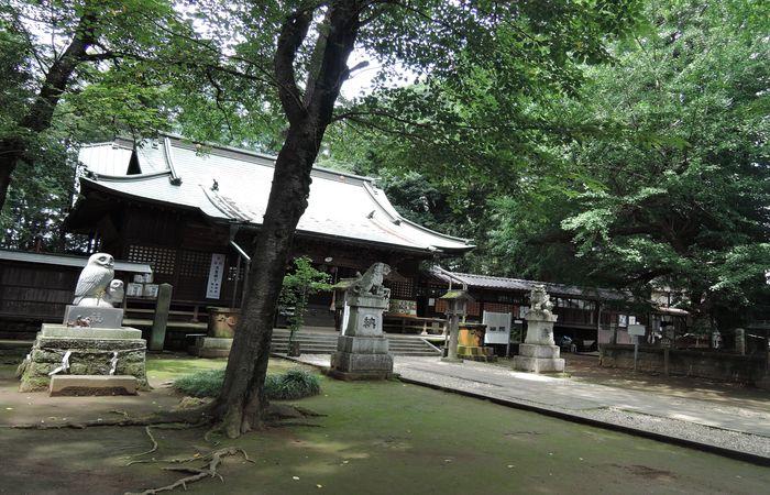 境内(野木神社)