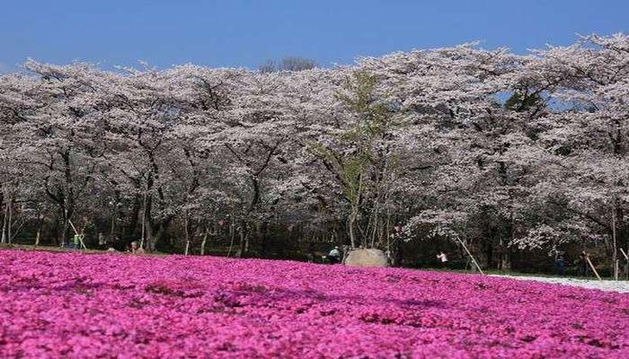 みやぎ千本桜の森
